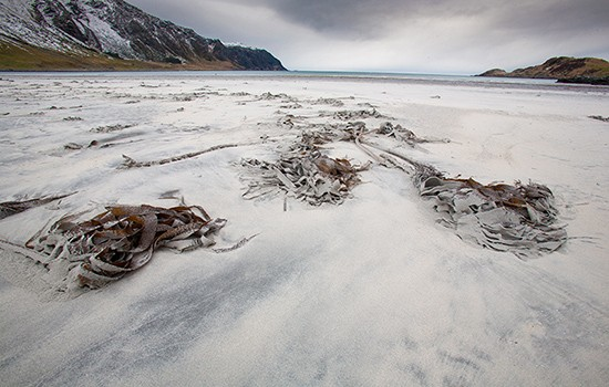 Noorwegen puur