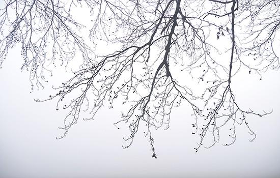 Foto van de maand december